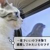 猫の道具 ~猫様用娯楽映像~