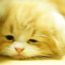 猫動画とDIYと絶景ドローン空撮とキャンプ