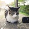 猫とか動物愛護センターとかボランティアとかについて、とりとめなく