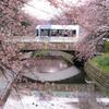 南北接続後、初めての桜:富山の路面電車
