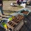 ブルーベリーの作業→鉢上げ、穂木のカット ブルーベリーの剪定⑤ジョウビタキ⑤