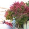 有馬温泉へ温泉と紅葉を楽しむ…過去20161112