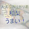大人なガリガリ君和梨がうまい!(☆)