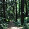 【ゆる旅】生き生きする私/「小石川植物園」に行ってきた