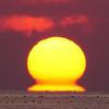 富山湾で季節外れの『だるま朝日』が出現!冬型蜃気楼と言われる『下位蜃気楼』の一種の『だるま朝日』が見られたのはかなりレア!!