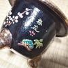 ヤフオクの錦鉢・・・。