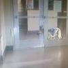やむにやまれぬ事情で保護施設に預けられた犬、どうしても飼い主に会いたくて3つの難関を突破し脱走に成功。
