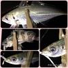 2週間ぶりの休漁日(色々あった4日間)