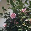 Steinheil Müunchen Culminar 1:2.8 f=8.5cm & α7で名残の梅と早咲きの桜を撮ってきました