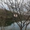 トレラン中に桜発見 - 先週の運動記録(2021/3/15〜2021/3/21)