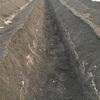 長ネギ植え溝穴掘り