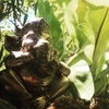 山梨の小さなバリサロン【Pijat Bali Teratai】テラタイのブログを始めました。