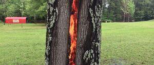 ついに地獄の門が開いてしまったか....落雷で燃える木の中に出現した裏側世界への入り口がすごいと話題に