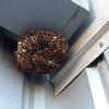 湖西市で工場にできたアシナガバチの巣を退治してきました!