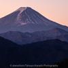 柳沢峠からの富士山 今年は雪が少ないね