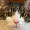 きょうだい猫の避妊、去勢手術の記録~避妊手術の予定が急遽去勢手術へ変更