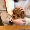 子犬のカフェデビュー