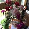 花がある生活は良い