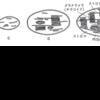 植物細胞の構造と機能: 色素体 (1)
