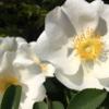 散歩で出会った花!(2021年4月12日)