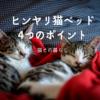 【オススメ猫グッズ】ヒンヤリ猫ベッドを選んだ4つのポイントと使ってみた感想から気に入ってくれた3つの理由について