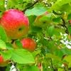 11月5日は「りんごの日」~りんごの温泉集めました!~