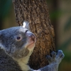 夏休み期間ならではのイベント~東山動植物園のナイトズー&ガーデンに行きたい♪~