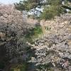 夙川公園(兵庫県西宮市) 桜 お花見 2019年 苦楽園口駅界隈