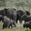 セレンゲティ サファリの記録ー象さんを見た