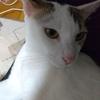 保護猫かペットショップかという荒れに荒れまくる話題