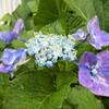 雨降りの中の花
