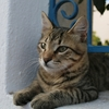 エーゲ海で暮らす猫/イタリアでの妊娠出産について
