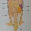 胃は左側にあります
