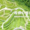 徳島ドローン撮影:樫原の棚田 誰もいない秘境の地がそこにあった