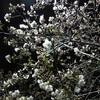 東京の夜桜~☆