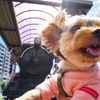 諏訪湖をお散歩!愛犬と機関車に乗ってきたよ♪