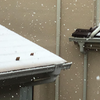 3月29日(日)は雪:32年ぶりに都心に1センチ以上の積雪