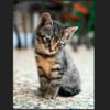 【まとめ】Affinity PhotoとPhotoshopの違いと、どちらがいいのか?