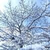地吹雪、ブリザード。