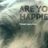 自分の犬が幸せかどうかを知る方法