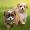 ペットヒーリン|オンライン・ヒーリング・動物ケア・ペットも身体の悩み