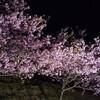 布施千本桜のライトアップ