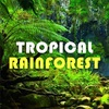 HiLIQ Tropical Rainforest リキッドレビュー