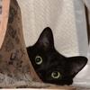 黒猫追加支援