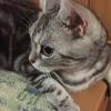 猫のススメ