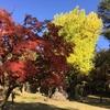 公園に紅葉を見に行く