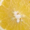 圧倒的美味のグレープフルーツ産地はフロリダ!旬も意識しよう!