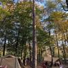 【山梨県】撫岳荘キャンプ場はグルキャンにおすすめの林間フリーサイト【ブログ口コミ】