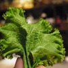 ふしぎな野菜 at 梅酒ダイニング明星