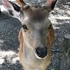 【日帰り】そうだ…鹿と戯れよう(表サイド)【名古屋→奈良】